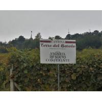 Вино Terre del Barolo
